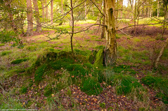 Fugsdon Wood (Robert Wilson Photography) Tags: treetrunk mossbank fugsdonwood