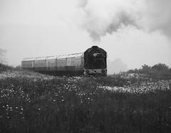 8F Heading Toward Greet Tunnel (NickieTaylor) Tags: heritage railway tunnel trains gloucestershire warwickshire greet 8f