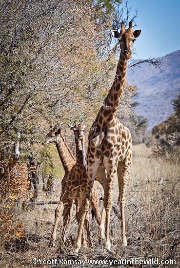 Marakele National Park - South Africa