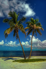 Paradise (GT_Dezines) Tags: ocean sky tree beach water clouds sand paradise waves gulf wind sony relaxing calm palm palmtree tropical serene hdr gtdezines