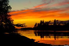 Fly Me to the Sun (Osprey-Ian) Tags: britishcolumbia vancouverisland uclulet terracebeach mygearandme mygearandmepremium
