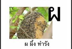 ผ ผึ้ง ทำรัง