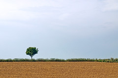 Ein einsamer Baum (~janne) Tags: sky plant nature germany deutschland flora europa europe hessen misc natur pflanzen feld himmel olympus environment minimalism zuiko baum radtour umwelt janusz minimalismus 1442mm e520 ziob