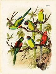 Birds Burgartz (OpiumMeadow) Tags: bird birds animals illustration vintage antique parrot parrots parrakeet