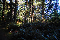 Oregon_2012_094.jpg Photo