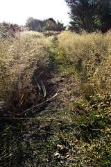 Follow the Golden Path (Jocey K) Tags: new trees christchurch sky plants sunlight grass zealand pathway