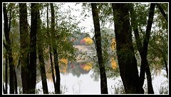 Looking through the trees..... (soneld) Tags: autumn trees australia canberra act lakeburleygriffin