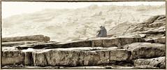 Fog and Waves Observed (Brett of Binnshire) Tags: blackandwhite bw seagulls weather fog watching maine hdr highdynamicrange schoodicpoint gouldsboro 2391 hancockcounty peoplesitting acadianpschoodicpeninsula