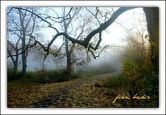 time to return to nature. (nature photographer.) Tags: road green nature fog canon time sis yol yeil zaman doa natureselegantshots atumncolor sonbaharrenkleri greenroads canoneosd7