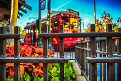 I Swear Red Car Trolley 623 Is Stalking Me (hbmike2000) Tags: nikon bokeh trolley balloon disney mickeymouse d200 dca hdr redcar disneycaliforniaadventure 623 disneylandresort hff buenavistastreet fencefriday hbmike2000 redcartrolley623