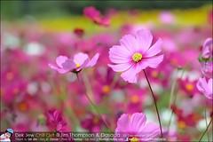 1Day-trip-Jim-Thompson-Farm&Dasada-Gallery_E12663461-021
