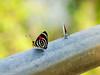 Borboletas (Marney Queiroz) Tags: color nature cores do natureza foz iguacu colorido queiroz marney panasonicfz35 marneyqueiroz