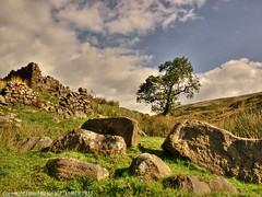 Lonely Tree - Thursden Lancashire (Daveyboy_75) Tags: tree olympus lancashire boulders hdr pennines lonelytree colne thursden lonesometree e450
