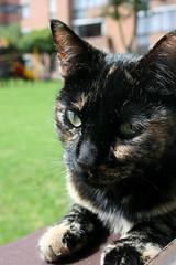 (Cinderella!!) Tags: cats cat gato felino