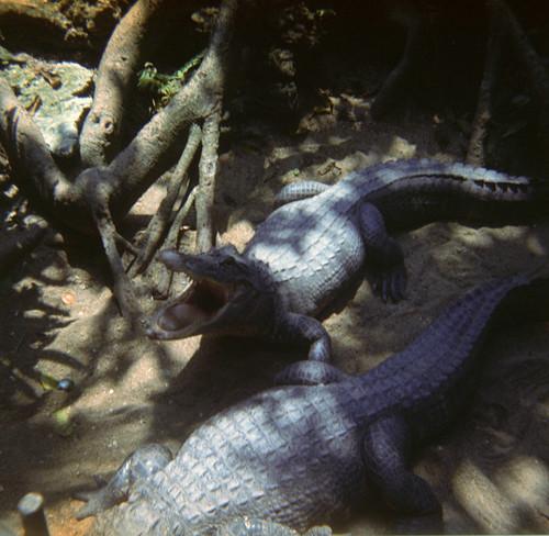 19720702_Florida_ParrotWorld_11.jpg