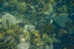 DSC09589 (andrewlorenzlong) Tags: fish coral swimming swim thailand rocks snorkel snorkeling urchin kohchang kohrang kohrangyai korangyai