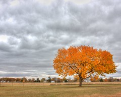 Stand Out (mazzmn) Tags: autumn sky orange tree fall field clouds fence landscape hdr lonetree htmt