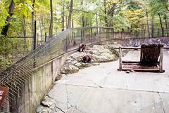 Bears (alexkane) Tags: bear autumn vacation mountain ny newyork fall america october bearmountain upstatenewyork newyorkstate mountainvacation