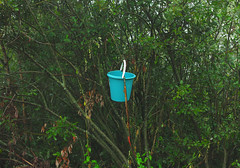 (Evgeny Chulyuskin) Tags: slr digital canon eos bucket bush plastic hanging 5d fullframe dslr canoneos5d 12mp