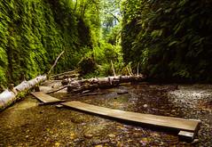 Fern Canyon (TheDailyNathan) Tags: ferncanyon redwoodsnationalpark redwoodsstatepark prairecreek humboldt california coast eureka redwoods canyon river stream creek gully ferns