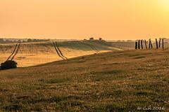 Wulfen/Fehmarn1 (Re Ca) Tags: fehmarn fehmarnsund fehmarnsundbrcke ostsee goldenestunde goldenhour landscape landschaft sunset sonnenuntergang feld field kaninchen