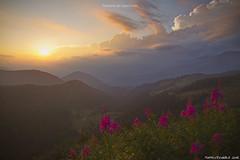 Tramonto dal Croce Domini (Matteo Rinaldi.it) Tags: maniva montagne tramonto fioritura crocedomini passocrocedomini stampa