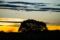lonely tree ... (mariola aga ~ OFF) Tags: evening sunset meadow park sky clouds tree silhouette