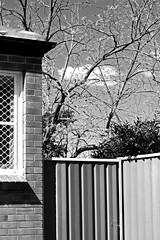 Spring (Tim J Keegan) Tags: australia bw nsw spring lakemacquarie speerspoint office