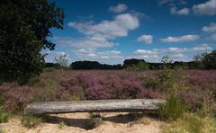 Take a seat and relax (Theo Bauhuis) Tags: heide heath heather blue clouds hollands landschap landscape netherlands bankje bench
