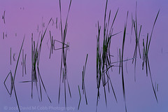 Morning Serenity (David M. Cobb) Tags: abstract simple simplicity eastern morning reeds water deschutesriver marsh sunrise reflection mirrorreflection calm serenity violet grasses summer bend oregon usa
