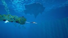 ABZÛ_20160806005621 (arturous007) Tags: abzu playstation ps4 playstation4 pstore psn inde indépendant sea ocean water fish shark adventure exploration majesticcreatures swim narrative myth experience giantsquid sony share journey