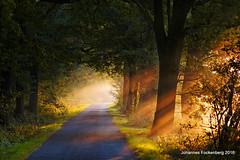 Morgenstund hat Gold im Mund (grafenhans) Tags: sony alpha 700 alpha700 a700 minolta 455675300 sonnenaufgang herbst weg wald farben color beleuchtung sonne grafenwald