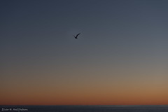 DSC_6160.jpg (Elvar H) Tags: arcticocean helmerhansen siarctic birds ice iceedge sunset