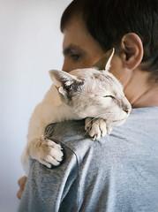 Man and his cat (lera_abrakadabra) Tags: catandman petsandpreople cutecat whitecat siamesecat pets man love tenderness trust animals cuteanimals friendship