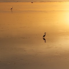 Sunrise (Tony Edmonds) Tags: bali bird beach weather silhouette fauna sunrise indonesia landscape asia place crane location subject nusadua genere 18270mm