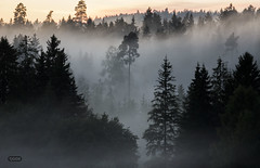Foggy forrest sundown walks