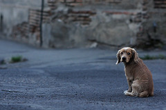 Little dog at the street in Tbilisi, Geogia (Simon Christiaanse) Tags: street dog animals georgia lowlight dof streetphotography caucasus tbilisi sakartvelo   flickraward5 flickrawardgallery highqualitydogs simonchristiaanse