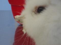 DSC03008 (Hospital Veterinario Taco. Santa Cruz de Tenerife.) Tags: hospital conejo perro taco gato clnica mascota salud veterinaria piel sarna veterinario acaros dermatologa