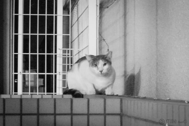 Today's Cat@2012-09-20