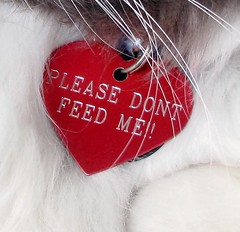 PLEASE DON'T FEED ME!!