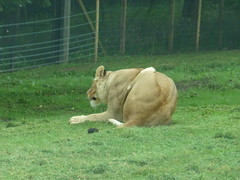 """Longleat Safari Park • <a style=""""font-size:0.8em;"""" href=""""http://www.flickr.com/photos/81195048@N05/8017647259/"""" target=""""_blank"""">View on Flickr</a>"""