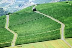Im looking down (Henry der Mops) Tags: green nature landscape strasse natur feld grn landschaft weg acker weinberge badmnsteramstein rotenfels strase norheim buschwindrose imlookingdown