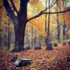 You can't choose what stays and what fades away (cherrygurl) Tags: autumn tree fall colors cemetery leaves square walnut graves squareformat tombstones iphoneography nikond3100 instagramapp xproii uploaded:by=instagram