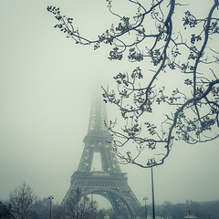 The Iron Lady and Mister Tree (Gilderic Photography) Tags: city trip travel winter urban mist paris france tree tower monument strange fog architecture square lumix europe tour hiver eiffel panasonic romantic arbre brouillard ville brume lightroom carre 500x500 gilderic tz4 dmctz4