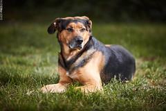 LOL (my dog) Profit B1 test (Emery Fred) Tags: dog 135mm canon 5dsr strobist profoto profotob1