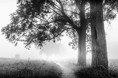 Trees BW (D.ROS) Tags: 2016 brown fog foggy grass green hazy mist misty morning nederland path rural schagen sunrise tree wood supershot