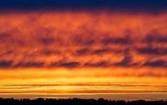Sky On Fire (kckelleher11) Tags: 100300mm 2016 ireland kildare olympus sunset august curragh em5 landscape omd panasonic sky skyonfire