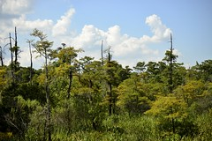 A tough year (holdit.) Tags: tx texas visitorcenter swamp nature natural