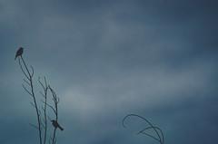 feels the same (L. Paul) Tags: birds twobirds sky emptysky dullsky mood emptyspace minimalism sonya6300 vivitar70200mmf35
