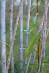 _DSC3444 (Boris Anipchenko) Tags: summer trees